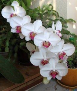 En qué estación es mejor cultivar orquídeas