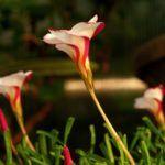 Flores Exóticas:  [Ejemplos, Tipos, Nombres y Características]