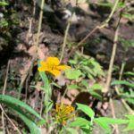 Flores Amarillas:  [Ejemplos, Tipos, Nombres y Cuidados] 🌹