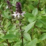 Flores Comestibles: [Ejemplos, Tipos, Nombres y Cuidados] 🌹