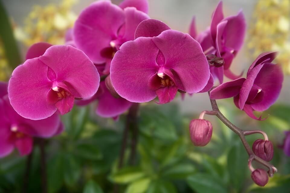 Flores ornamentales Plantas de interior