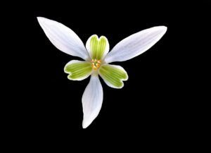 Corola y partes de una Flor