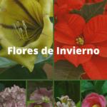 Flores de Invierno: [Cuidados, Riego, Significado y Características] 🌹