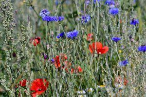 Las gramíneas y las flores