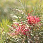 La Regadera Verde: Todo sobre Las Flores 🌷🌸🌼