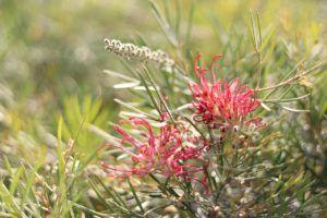 ¿Qué son las flores? Las Angiospermas
