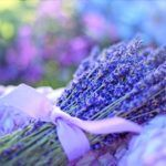Flores Aromáticas:  [Ejemplos, Tipos, Nombres y Cuidados] 🌹