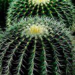 Cactus: [Cuidados, Riego, Cultivo, Significado y Características]