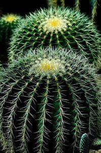 Características de los cactus
