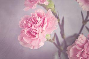 Flores más famosas