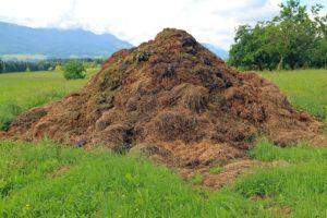 Compost, tierra y sustrato en el cultivo de Flores
