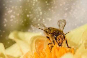 Flores: Atracción para todo tipo de insectos y en especial las abejas