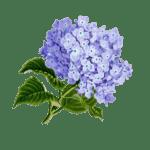 Flores Bonitas:  [Ejemplos, Tipos, Nombres y Cuidados] 🌹