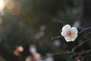 Flor, Germinacion