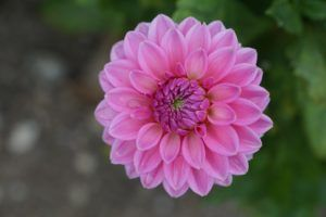 Partes de una flor: el Androceo y el Gineceo