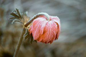 Cuidados de las flores de invierno