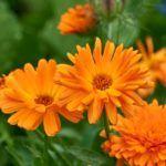 Flores Llamativas:  [Ejemplos, Tipos, Nombres y Características]