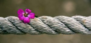 Flores y clavel