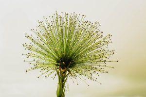 Características de las Flores Verdes