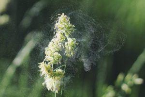 Polinización anemógama o de viento