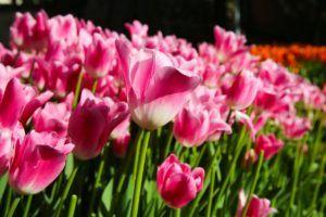 Producción de flores a nivel mundial