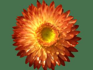 ¿Qué tipos de flor hay?