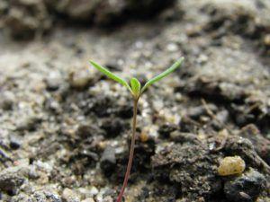 Cómo hacer para que las semillas crezcan más rápido