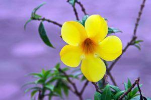 Cómo se llama el conjunto de pétalos de una flor - Corola