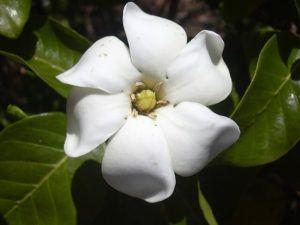 Cómo se produce el aroma de las flores