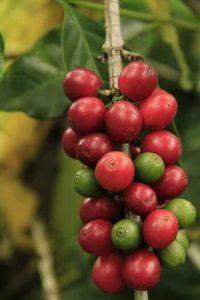 Cómo se produce el fruto de la planta