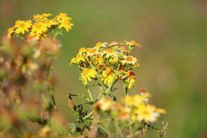 Cuál es la reproducción más sencilla y eficaz para las plantas