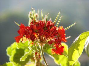 Cuáles son las partes de una flor y qué función tiene cada una - El tallo