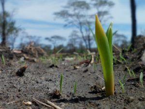 Cuánto dura el proceso de germinación