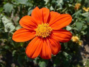 Cuidados de las flores anuales