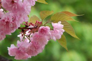 Cuidados de las flores de temporada