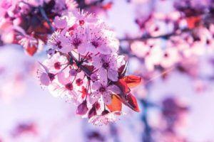 El Aroma y el Olor de las Flores
