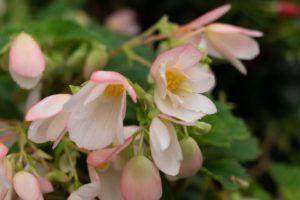 En qué consiste la floricultura