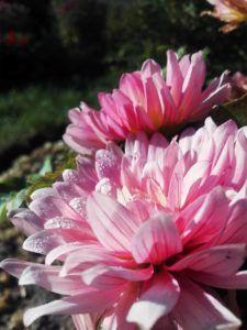Especies producidas por la floricultura en función al objetivo final