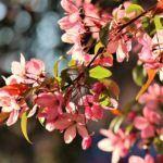 Floración: [Concepto, Duración, Etapas y Cuidados]