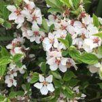 Flores Bianuales: [Cultivo, Cuidados, Plagas y Enfermedades]