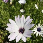 Función de las Flores: [Concepto, Partes de una flor y Polinización]