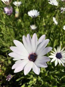 Función de las Flores