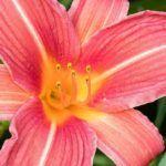 Partes de una Flor: [Conceptos y Características]