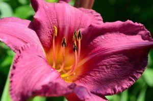 Partes de una flor - Ovario