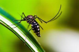 Plagas y enfermedades que atacan al jazmín