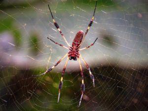 Plagas y enfermedades que atacan al romero - Araña roja