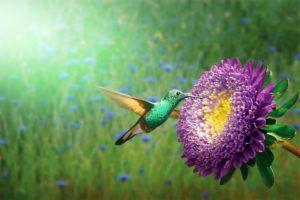 Por qué son importantes para su reproducción los colores llamativos de las flores - Colibrís