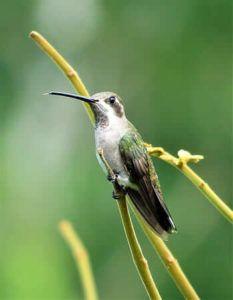 Qué animales contribuyen a la polinización - Aves polinizadoras