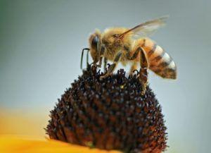 Qué animales contribuyen a la polinización - Insectos polinizadores