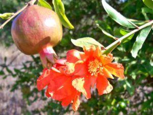 Qué diferencia hay entre la flor y el fruto